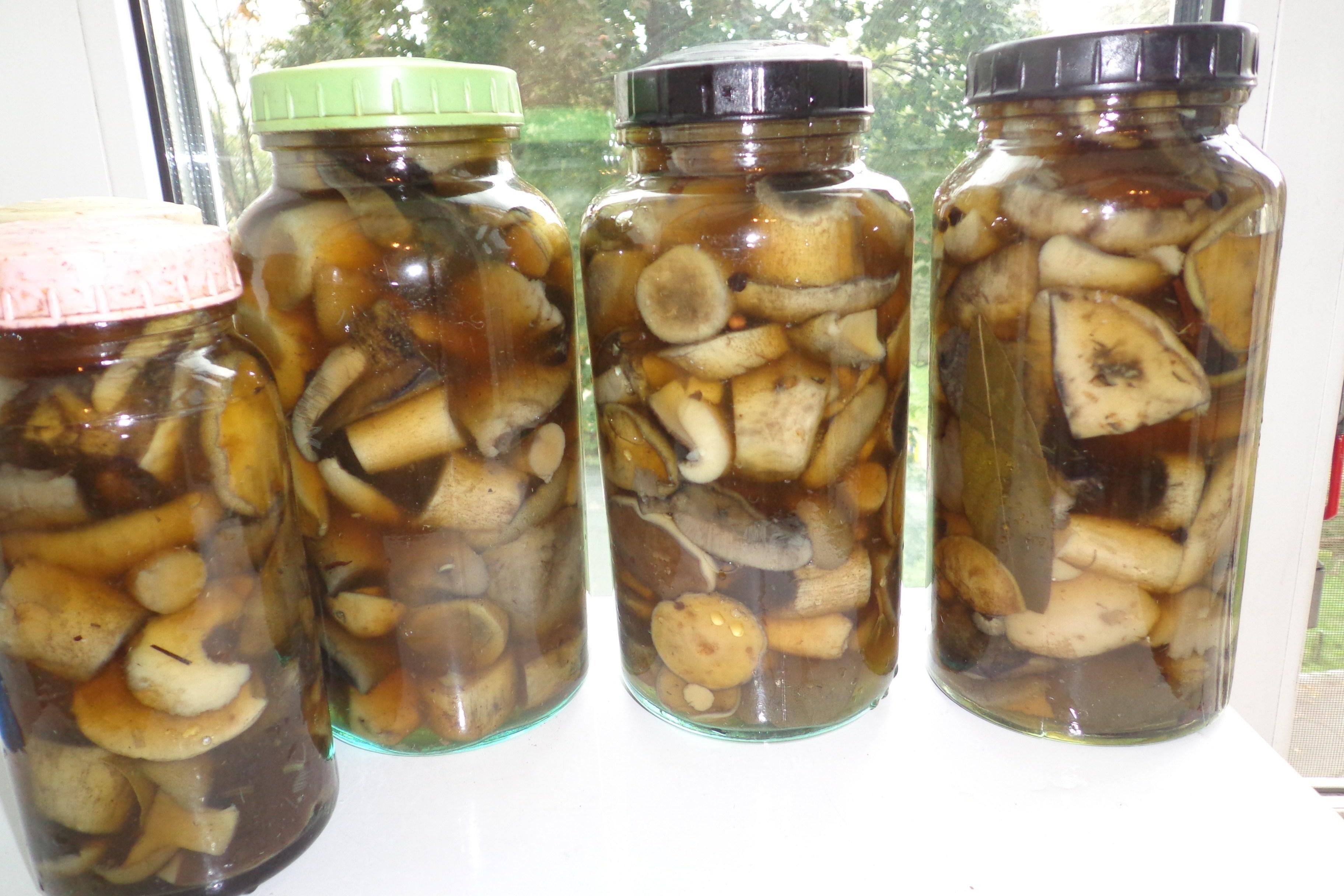 Засолка грибов на зиму в банках 35